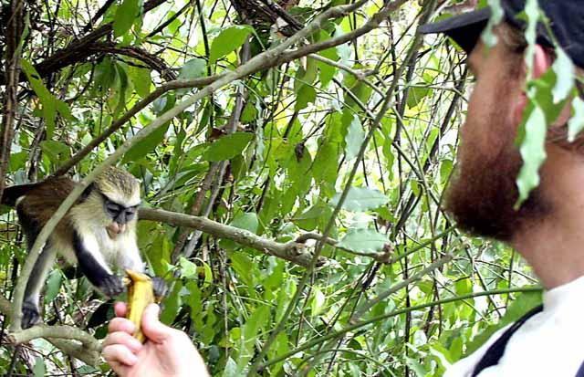 Karl feeds the monkeys