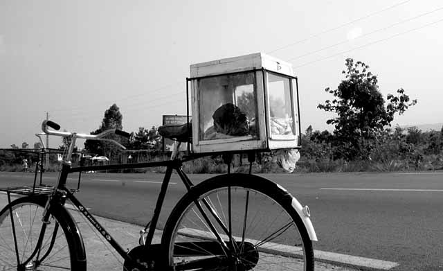 """Ice cream """"truck"""" in Bénin"""